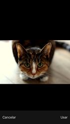 Envía fotos, videos y audio por mensaje de texto - Apple iPhone 6 - Passo 11