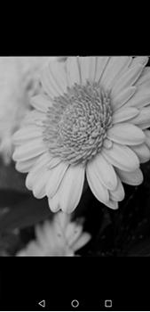 Función de fotografía monocroma - Huawei P20 Pro - Passo 5