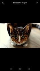 Envía fotos, videos y audio por mensaje de texto - Huawei P9 Lite Venus - Passo 17